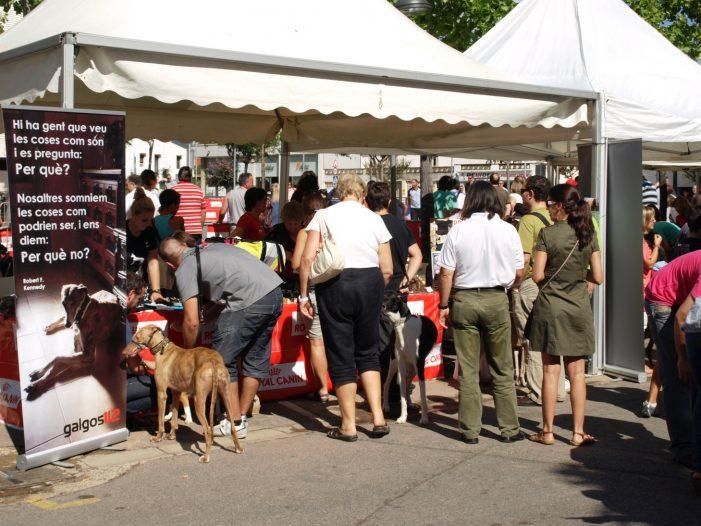 """Èxit de participació en la 3ª edició del """"FESTIGUAU! una diada de gossos"""" de Santa Cristina d'Aro"""
