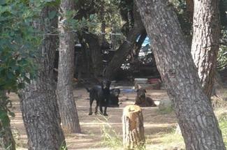 La barraca del bosc d´en Rabell deixarà de ser un problema