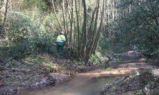 Millores ecològiques al rec Clar i el Riudaura