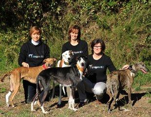 Galgos 112, de Sant Feliu, ja ha salvat 1.300 gossos