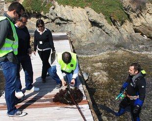 Denunciats quatre pescadors d'eriçons de mar i cinc restaurants