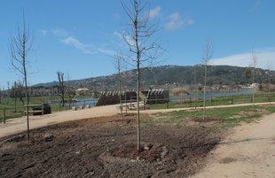 Planten 330 arbres al parc dels Estanys de Platja d'Aro