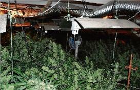 Els Mossos troben a Santa Cristina un miler de plantes de marihuana