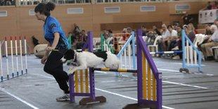 Festival de gossos d'elit a Platja d'Aro