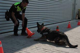 Els gossos policia de Platja d'Aro faciliten la detenció de quatre traficants