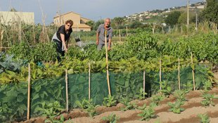 L'agricultura urbana fa planter