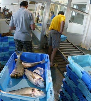 Front comú de les llotges per vendre millor el peix