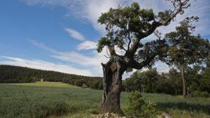 Baix Empordà / Giron