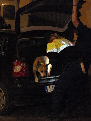Olfacte policial