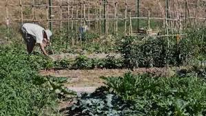 Sant Feliu farà un nou sorteig per adjudicar un hort urbà vacant