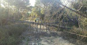 Arbres caiguts en pistes forestals de les Gavarres per culpa del fort vent. FOTO: ADF Gavarres  Foto: ADF
