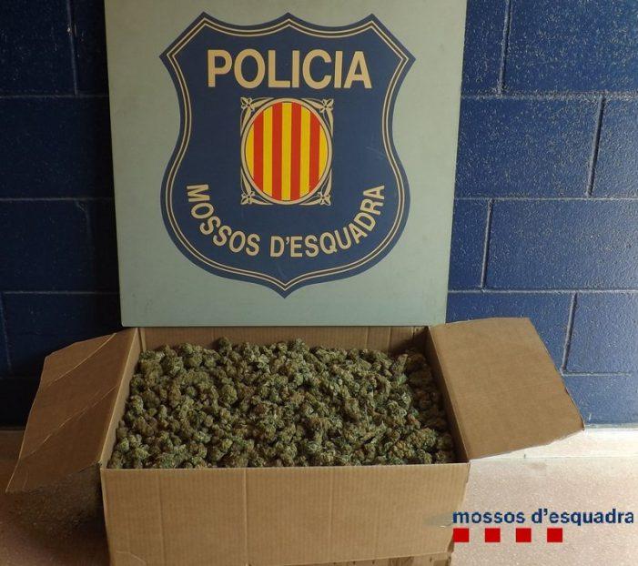 Un lladre perd 5 kg de marihuana i se li espatlla el cotxe, a s'Agaró