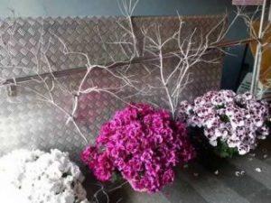 flors_ajuntsfg-325x244