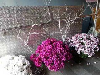 """Arriba una nova edició del certamen """"Guíxols Flors"""""""