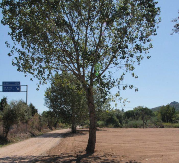 Santa Cristina tindrà 25 horts urbans a l'entrada de la urbanització del Golf