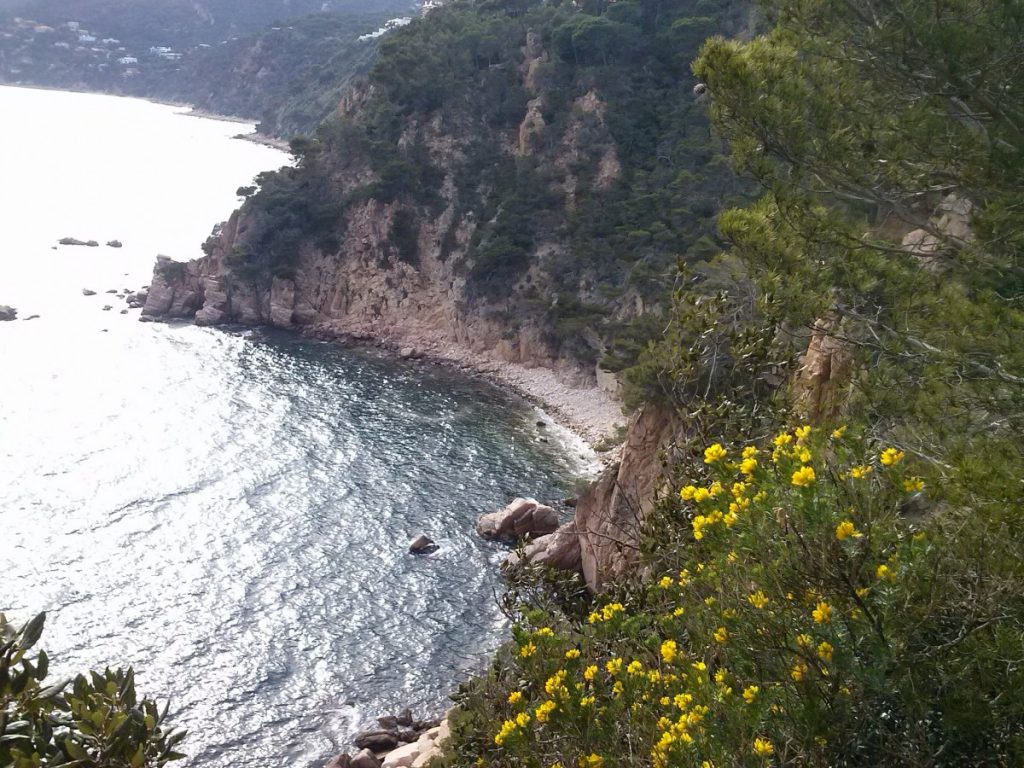 Sant Feliu vol activar les microreserves marines