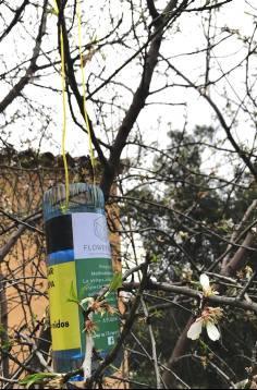 Una organització amb seu a Sant Feliu de Guíxols lluita contra la vespa asiàtica