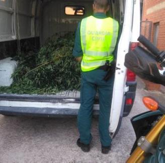 Comissen 22 plantes de marihuana en una finca de Santa Cristina d'Aro