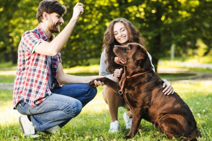 Motas promet dos espais per a gossos a la ciutat