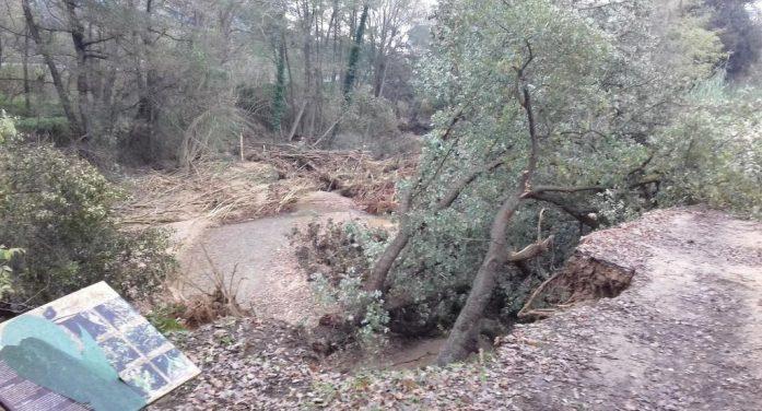 """Cau el roure dels """"tres quercus"""", arbre monumental del bosc del Balcà de Santa Cristina"""
