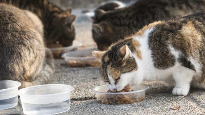 Crida de voluntàries/voluntaris que són alimentadores/alimentadors de les colònies de gats de Sant Feliu de Guíxols