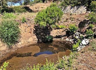 Platja d'Aro recupera la bassa temporal de Puig Pinell per preservar la fauna