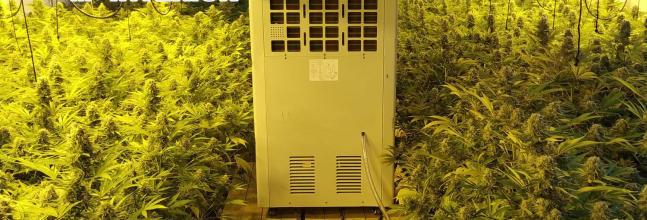 Una denúncia anònima al web del CNP permet descobrir un cultiu de marihuana a St. Feliu