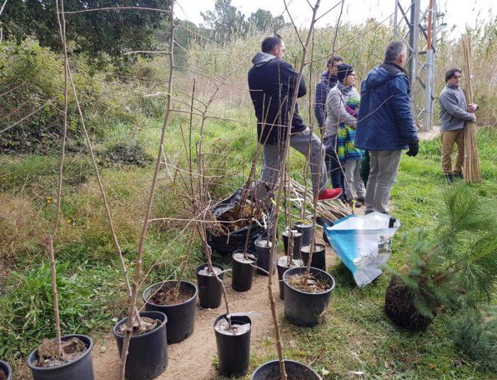 Plantada d'arbres dels Polseres Verdes