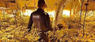 Una queixa per l'estat d'un gos posa al descobert 1.000 plantes de marihuana