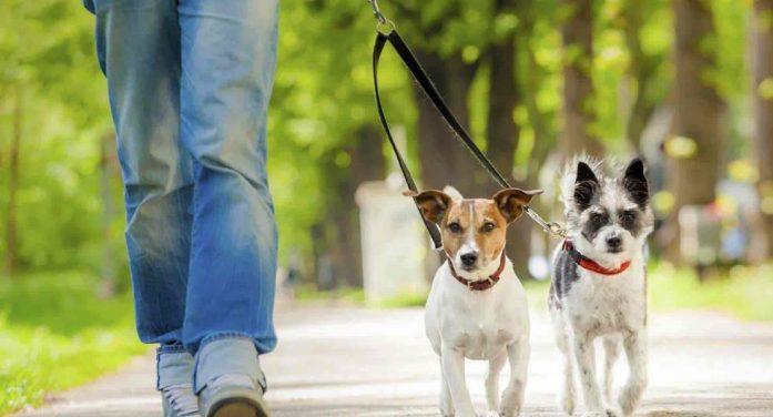 Distància màxima per passejar el gos, que és de 200 metres