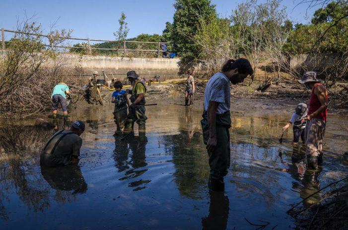 Prop de 3.500 exemplars de cranc roig retirats en dos dies de voluntariat ambiental a les basses de Santa Cristina d'Aro