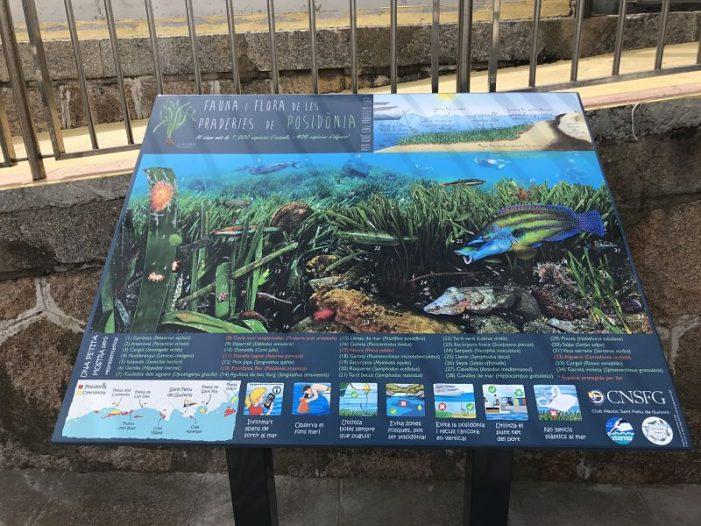 El Club Nàutic Sant Feliu i el Grup Natura Sterna signen un conveni per preservar les fanerògames marines