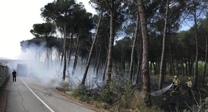 Cremen 1.000 metres quadrats de sotabosc a Platja d'Aro